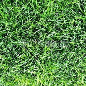 stock-photo-grass-112209047